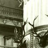 Trofea mysliwskie w pałacu